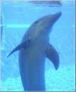 Lisbon Zoo Dolphin.