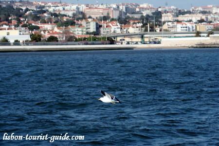 Lisbon Rio Tejo - Tagus River.