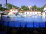 Lisbon Zoo Dolphin Show.