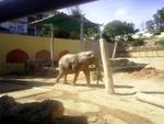 Lisbon Zoo Elephant.
