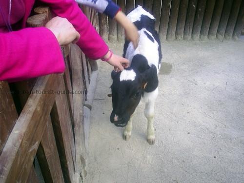 Lisbon Zoo Children Farm.