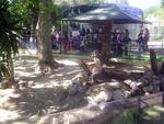Lisbon Zoo Kangoroo.