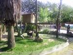 Lisbon Zoo Monkey.