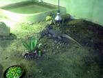 Lisbon Zoo Reptile.